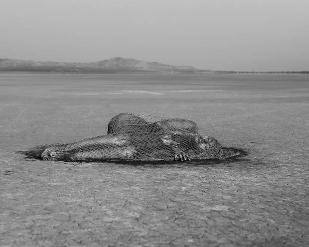 Marisa Papen nue pour la SEA